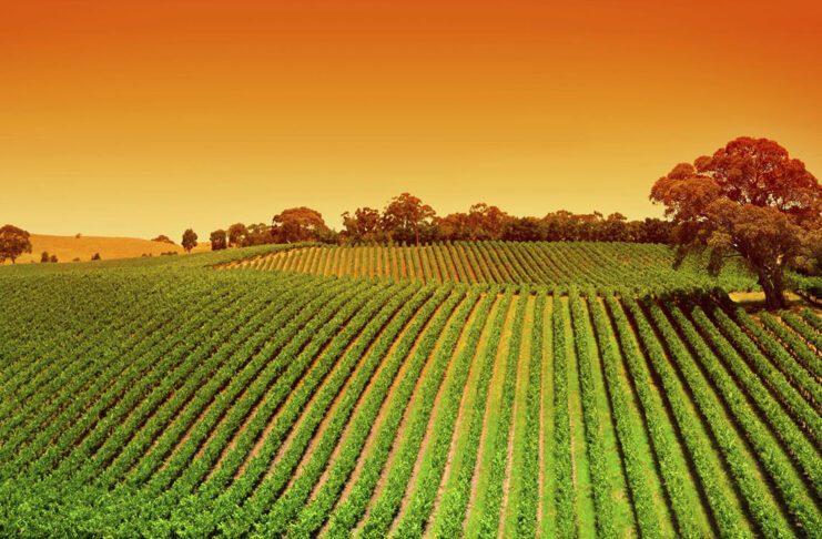 settore agricolo